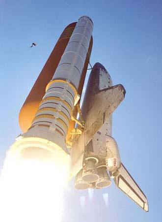 Bird Strikes Could Threaten Space Shuttles, Too