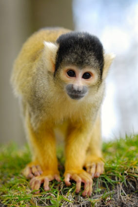 NASA to Subject Monkeys to Radiation
