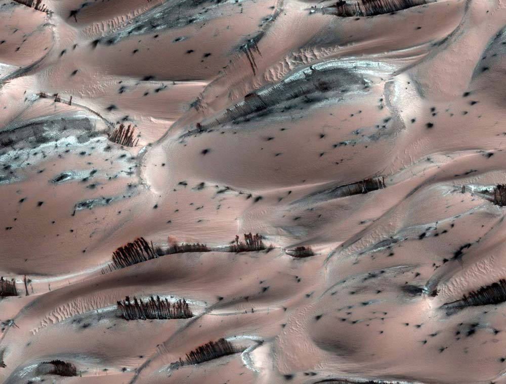 Strange Mars Photo Includes Tantalizing 'Tree' Illusion