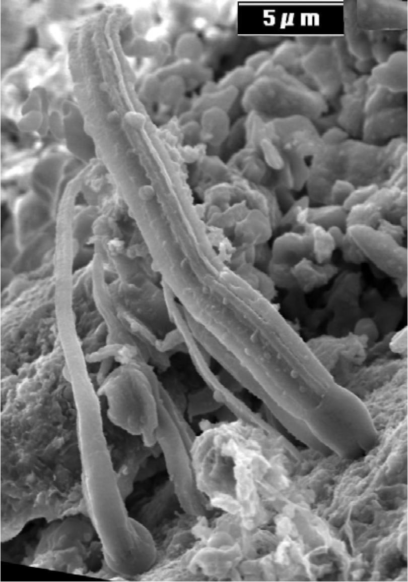Microbes in Meteorites