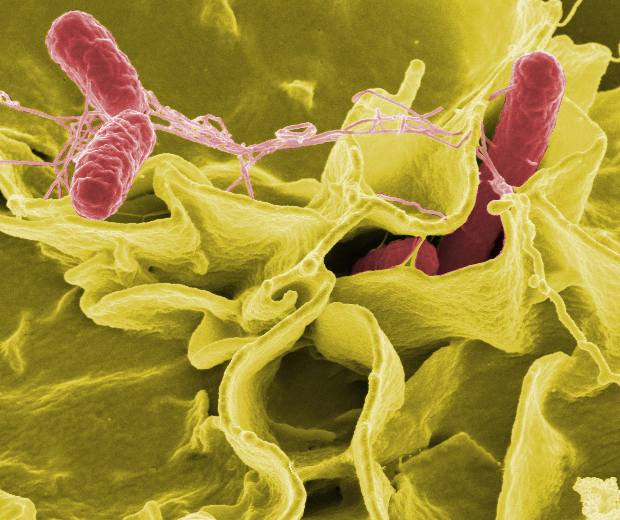 Bacteria Grow More ... and Are More Deadly