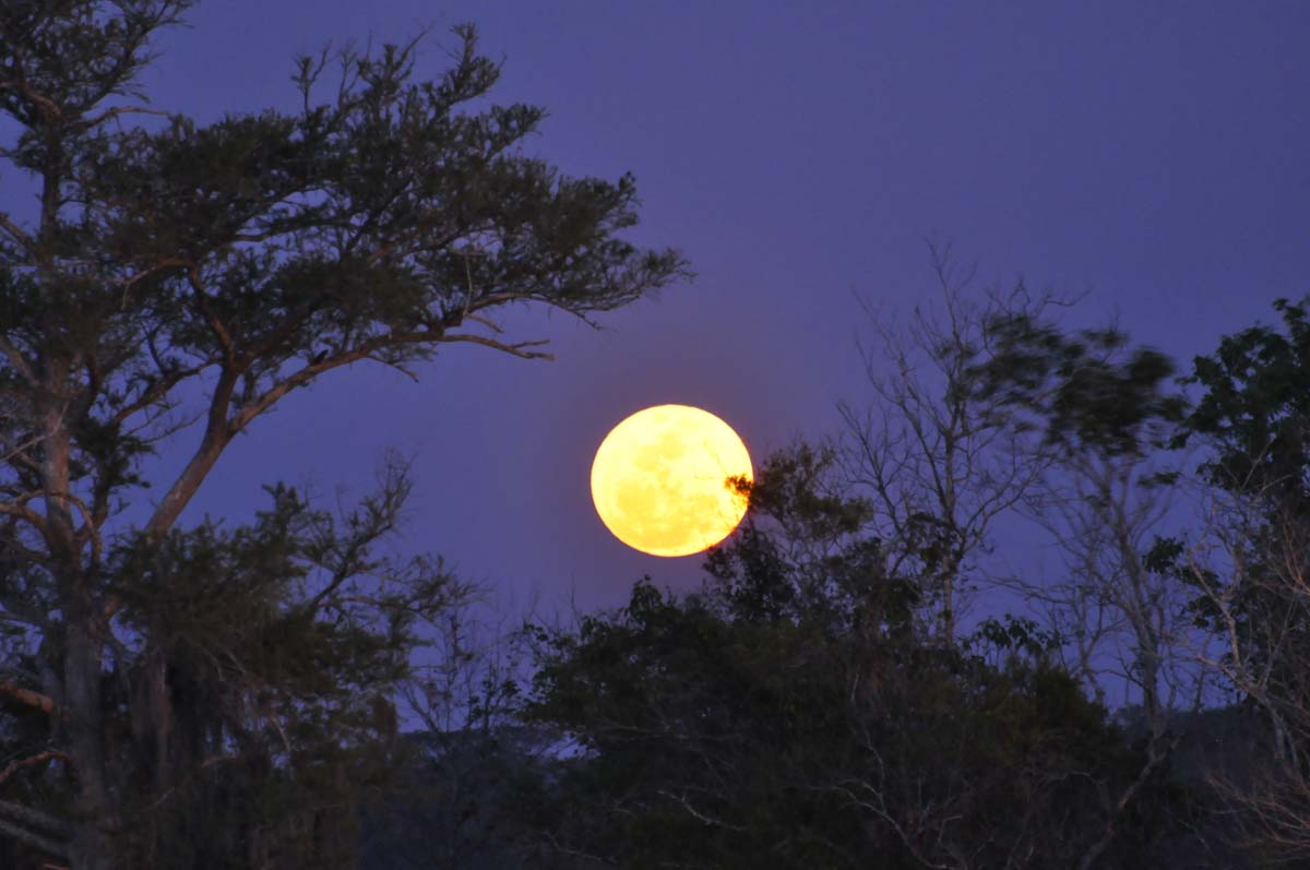 The full moon rises behind some trees in this photo taken by skywatcher Brad Ervin in Bruswick, Georgia on March 19, 2011, when the moon was closer to Earth than it had been in 18 years.