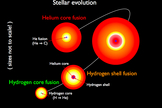 Stages in the evolution of a star like the sun. The sun is currently fusing hydrogen into helium in its core (lower left). In later stages, when it becomes a red giant, the star will fuse hydrogen in a shell around the helium core (2nd and 3rd figures). Finally, the red giant will begin to fuse helium into carbon in its core (4th figure).