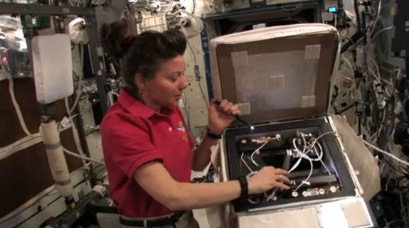NASA astronaut Cady Coleman checks out the enclosure containing two golden orb spiders on the International Space Station as part of an experiment to study how spiders weave webs in weightlessness. The spiders were delivered to the space station by the shuttle Endeavour during NASA's STS-134 mission in May 2011.