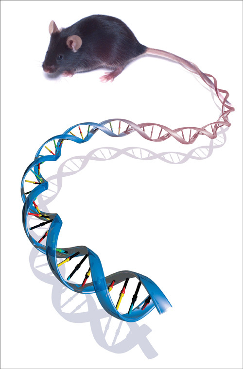 Mouse & DNA. A mouse's tail that transforms into a strand of DNA.