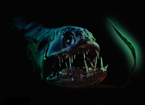 Illustration of a dragonfish, created by Peter Shearer after digitally altering his photo of a dead Black Dragonfish (with left and right flipped for convenience).