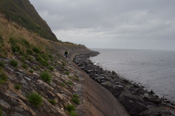 On a cool, misty morning, the research team makes their way along the top of a seawall toward the research site.