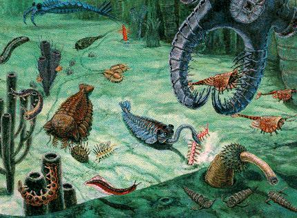Animal in the life in the Cambrian displayed all sorts of new physical forms and functions.