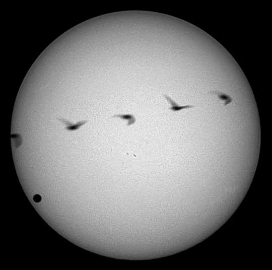 Venus and the Bird