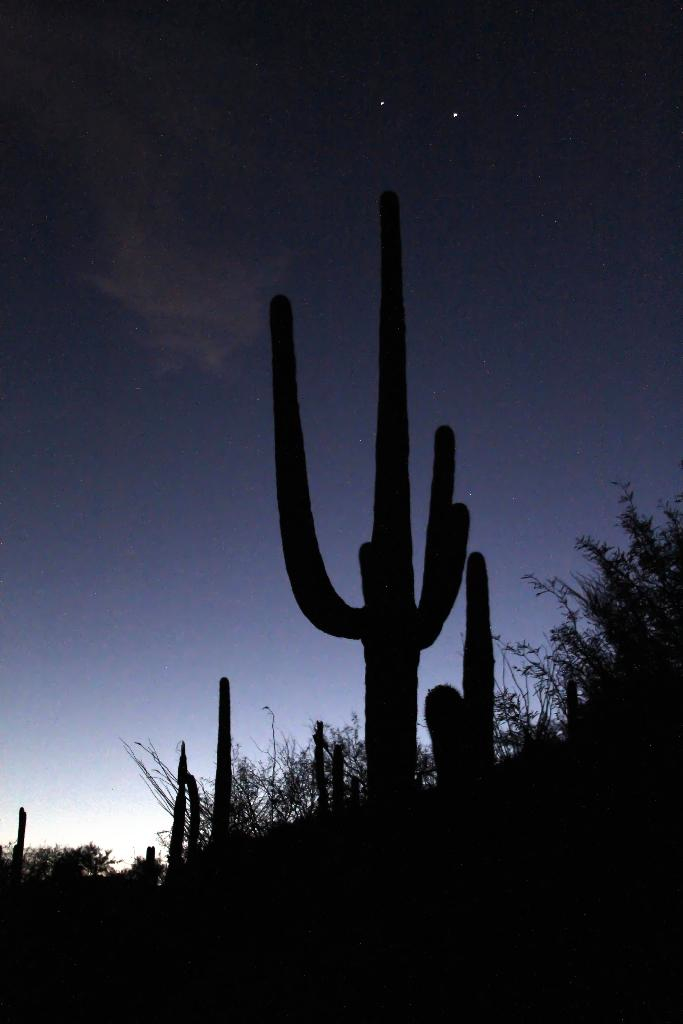Venus and Jupiter Shining Above Saguaros