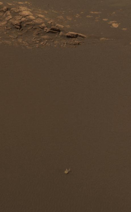 Bunny Rabbit on Mars