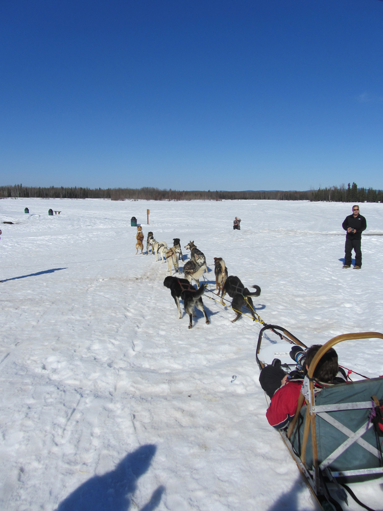 Sled Dogs Take Off