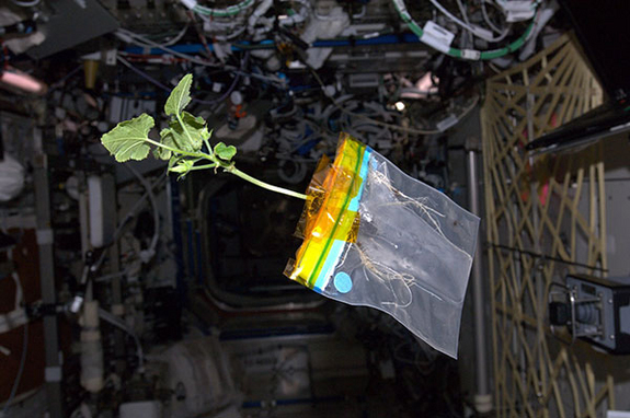 Sex in international space station