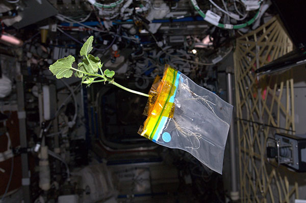 Space Zucchini's Orbital Life and Times Blogged by Astronaut