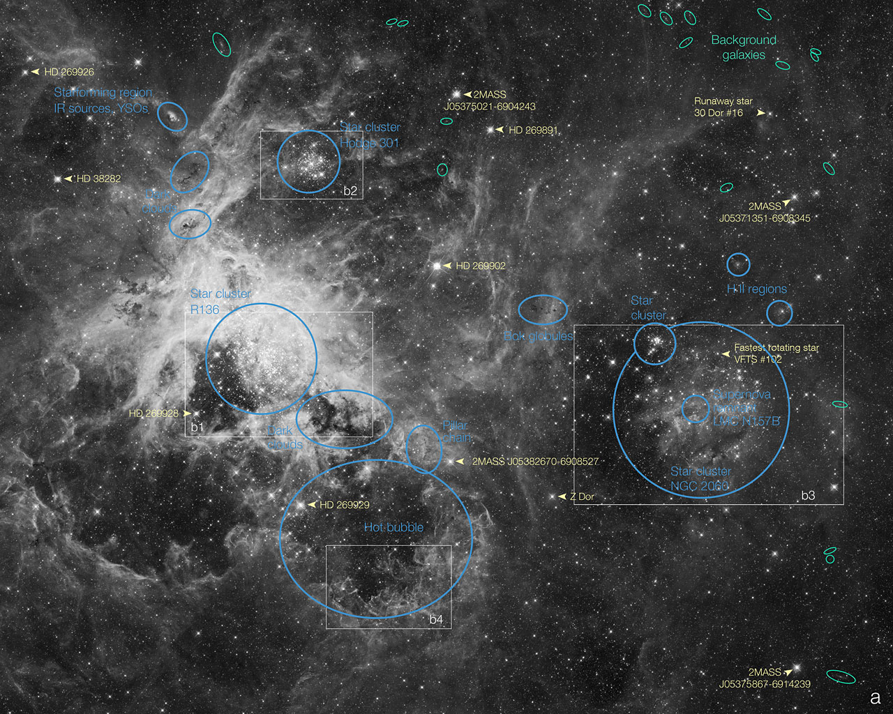 Hubble Telescope's Labeled Look: Tarantula Nebula