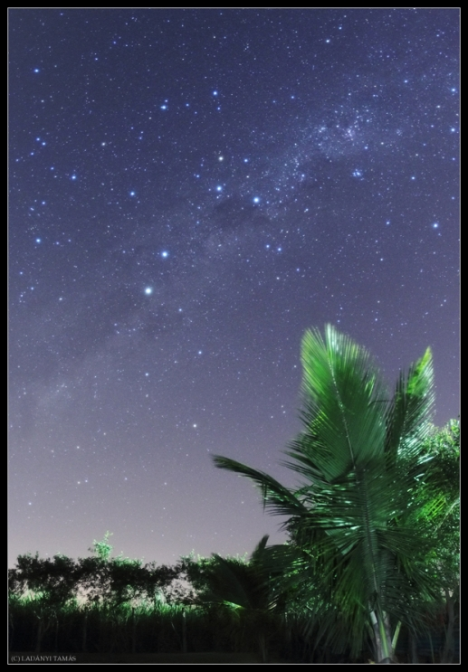 Southern Cross Shines Above Palms in Skywatcher Photo