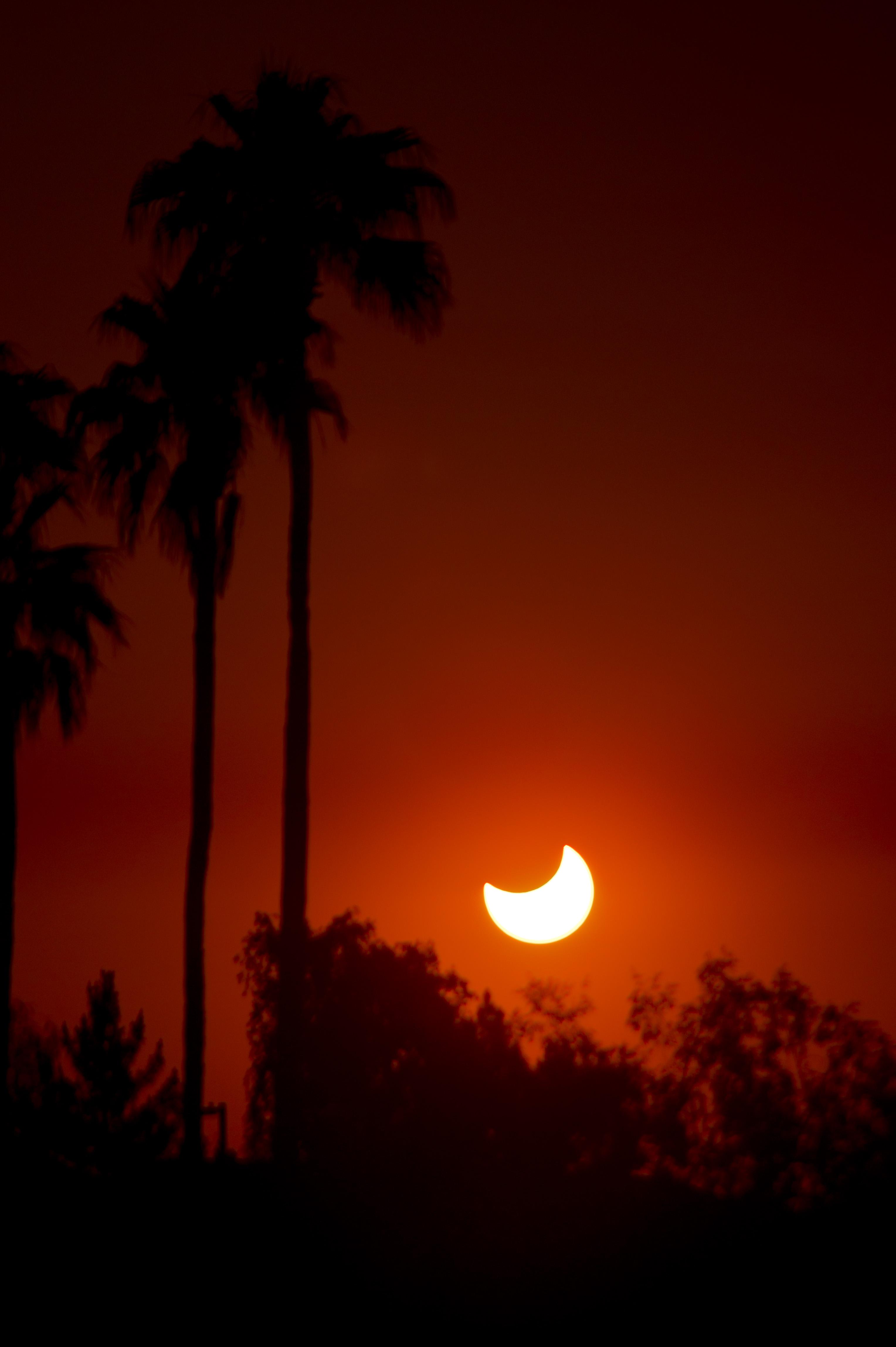 Annular Solar Eclipse Among Palms