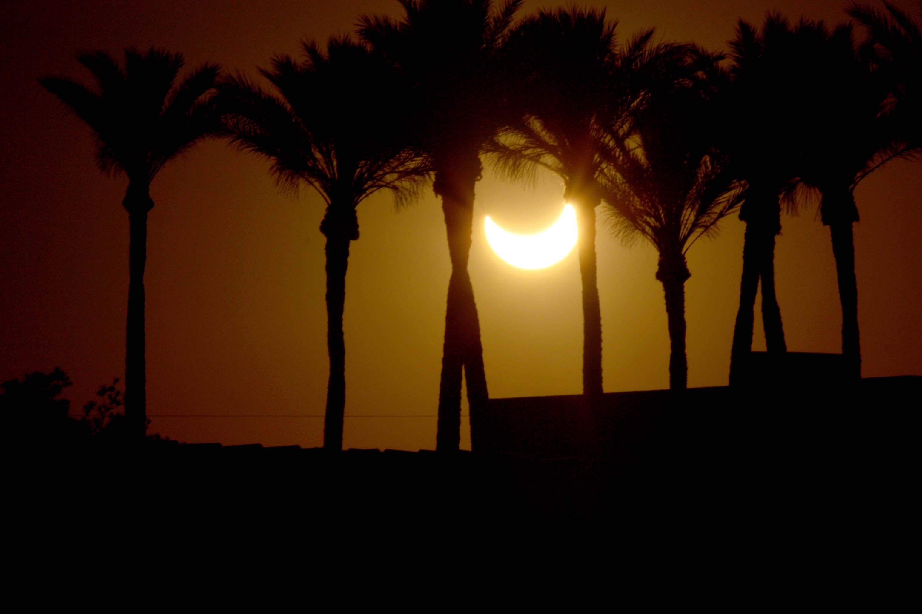 Eclipse Among Palms