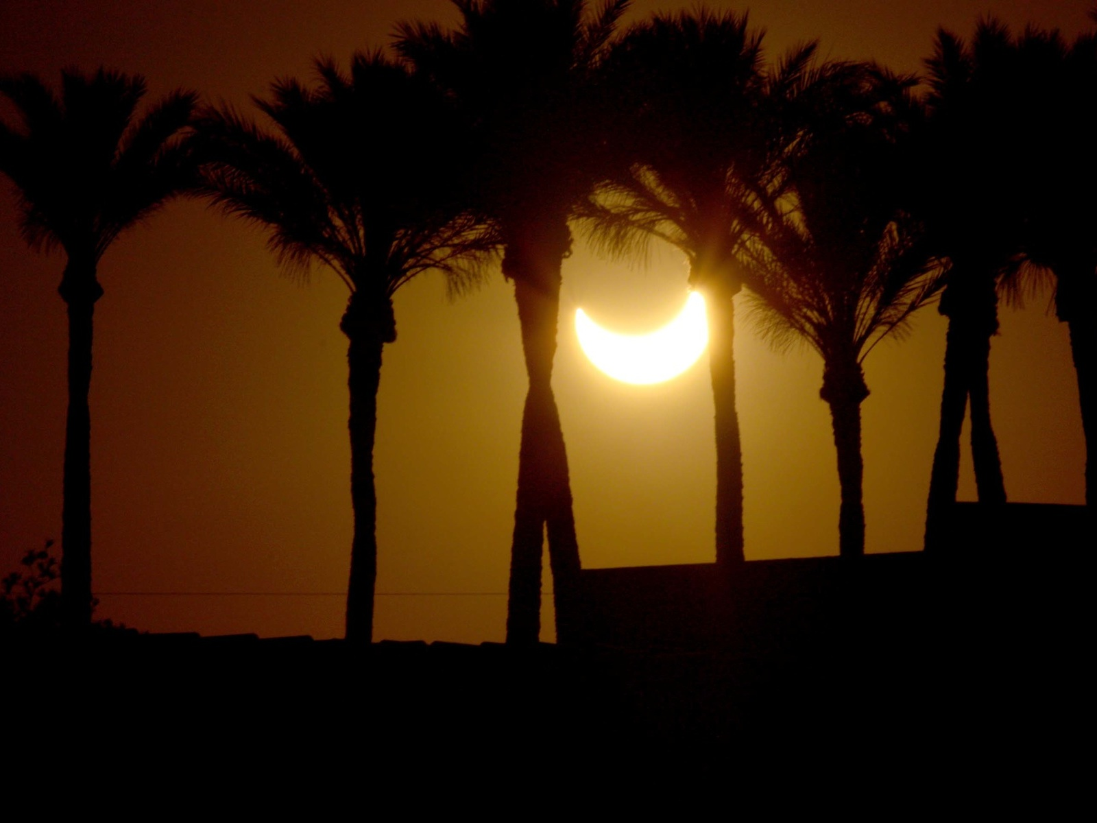 Eclipse Rocking Among the Palms