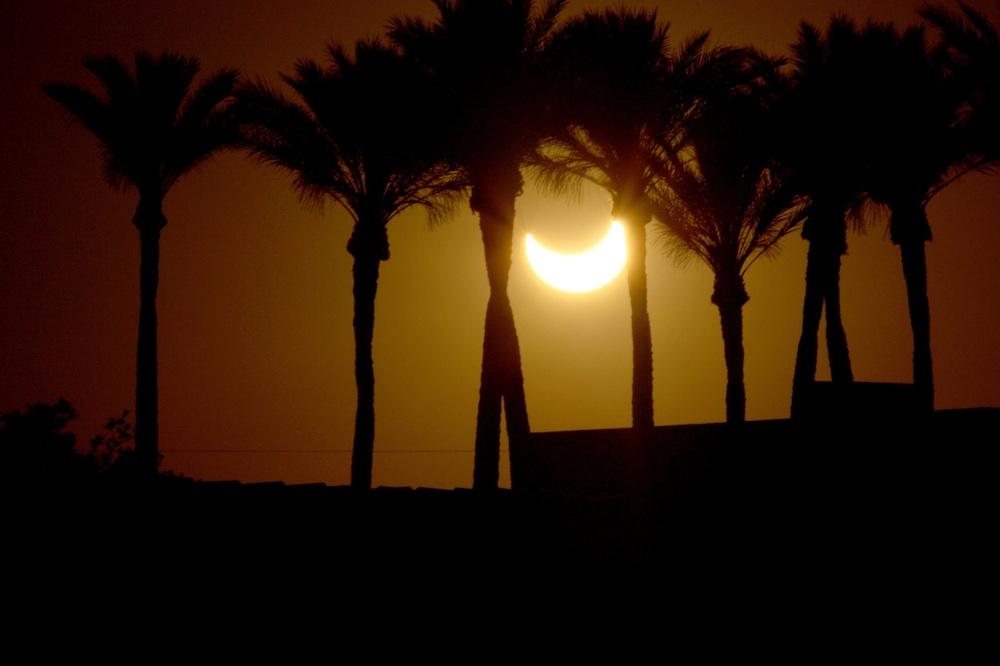 Eclipse Among the Palms