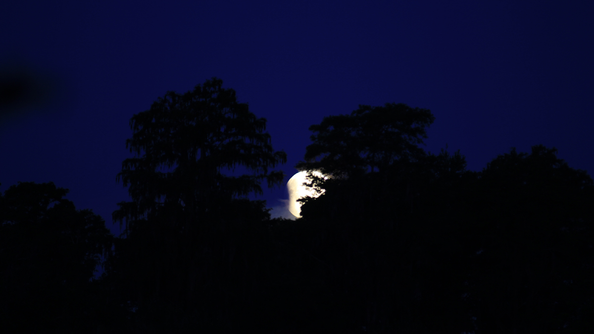 Partial Lunar Eclipse Seen from Palm Harbor, FL