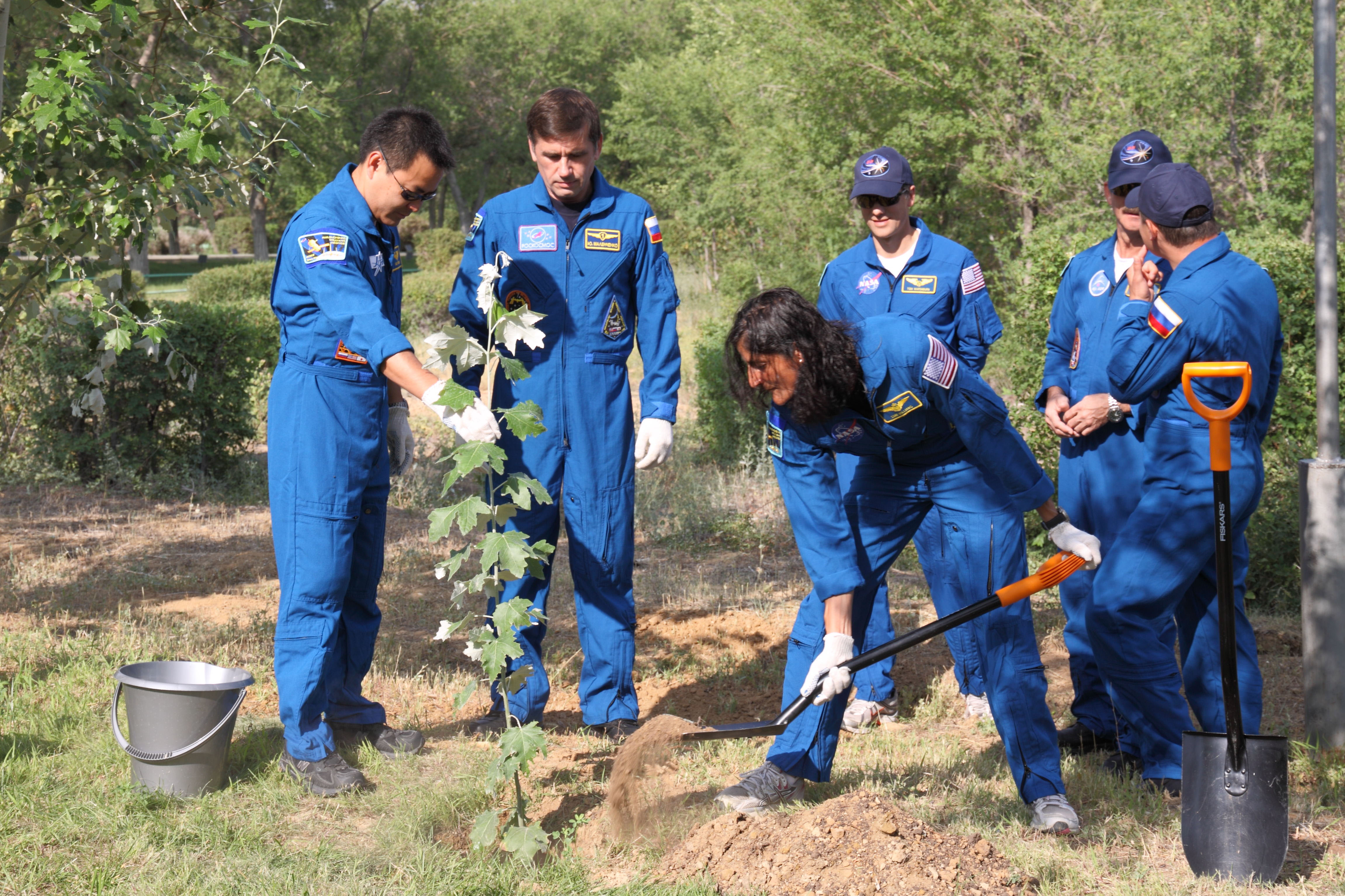 Expedition 32 Commander Williams Plants a Tree