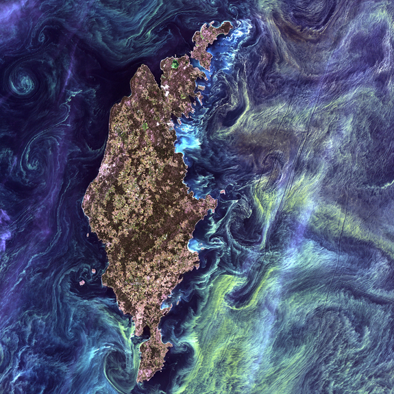 "Swirls of yellow streak a deep blue sea around a long island In the style of Van Gogh's painting ""Starry Night,"" massive congregations of greenish phytoplankton swirl in the dark water around Gotland, a Swedish island in the Baltic Sea."