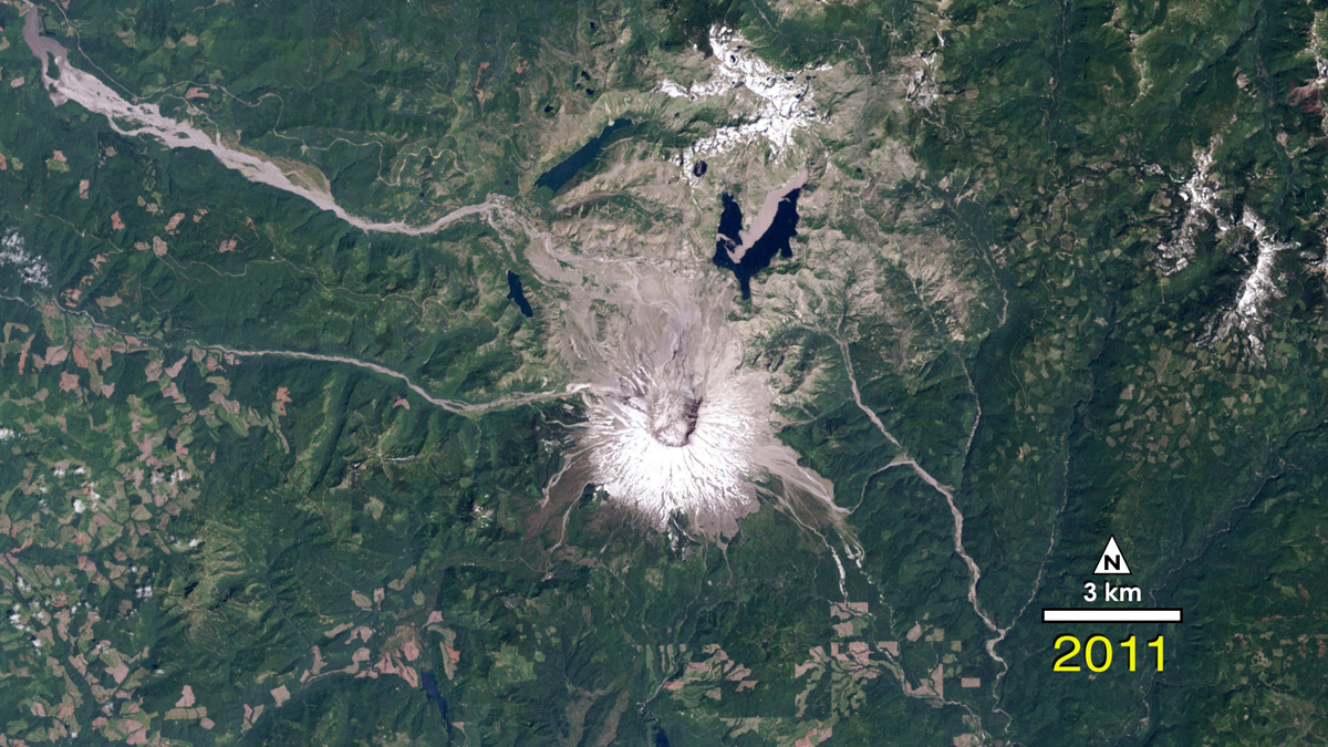 Forest Recovering From Mount St. Helens Eruption