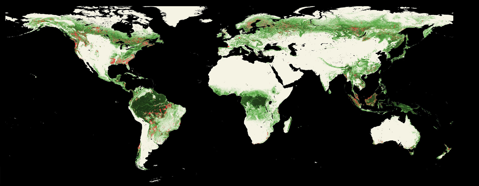 International Deforestation Patterns in Tropical Rainforests