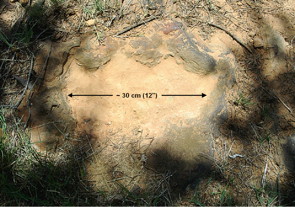 NASA Goddard dinosaur tracks.