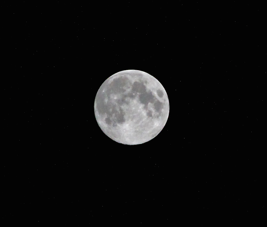 Kentucky Blue Moon