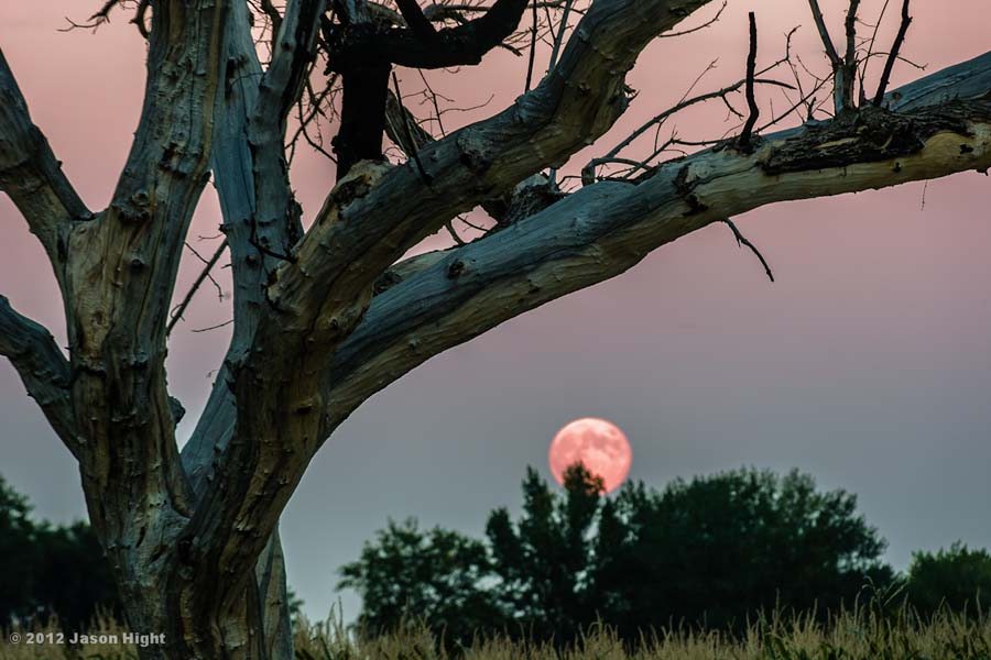 Tree & Moon