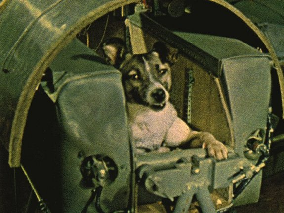Laika, a mixed-breed dog, was the first living being in orbit. She was launched on the Soviet Union's Sputnik 2 mission in November 1957.