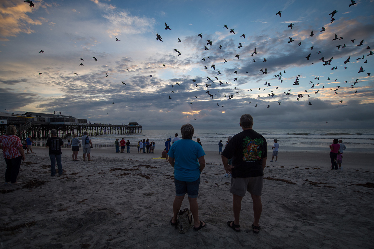 Waiting for Endeavour with Birds on Cocoa Beach