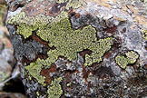 Lichen is a familiar sight on rocks, but it can also inhabit inhospitable areas such as hot deserts.