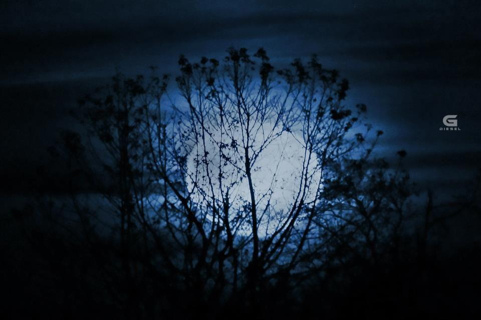 The Moon, Earth's Nearest Neighbor