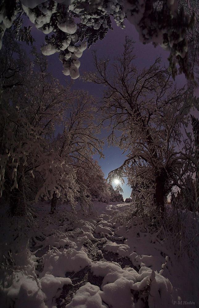 Moonlight Shines Over Swedish Winter Wonderland (Photo)