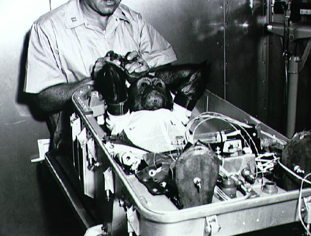 Enos the Chimp Before His Orbital Flight