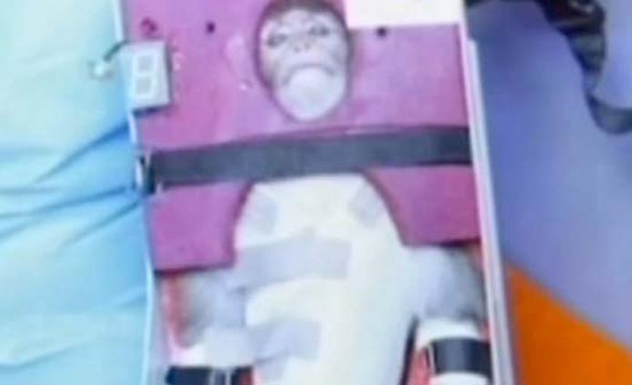 Iran's monkey