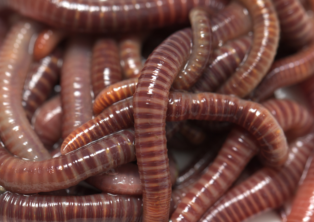 Weightless Worms