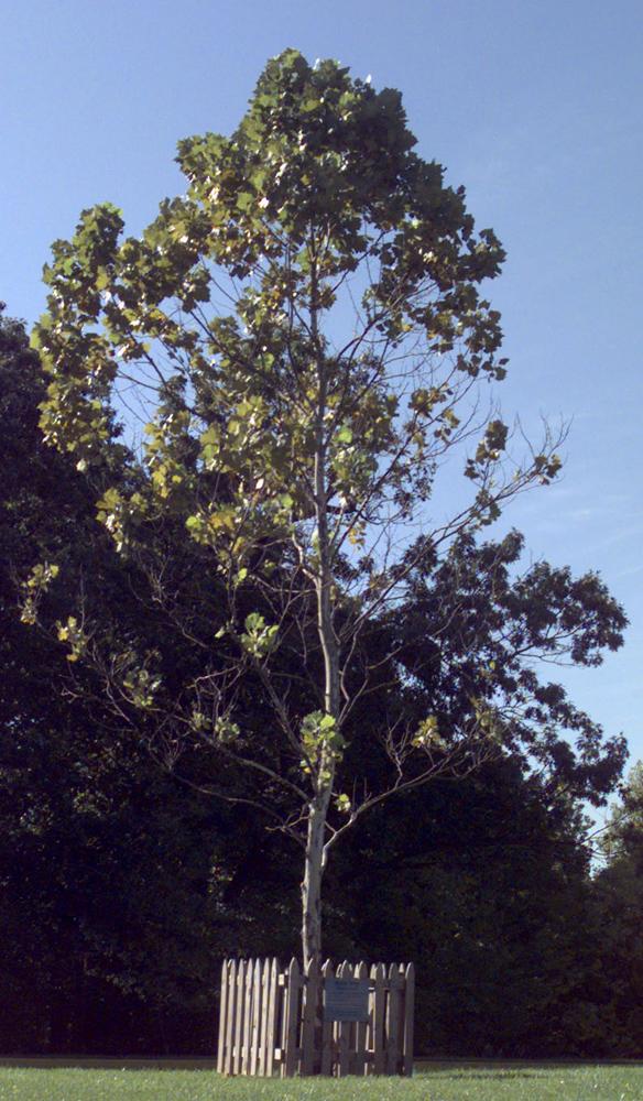 Apollo Moon Trees