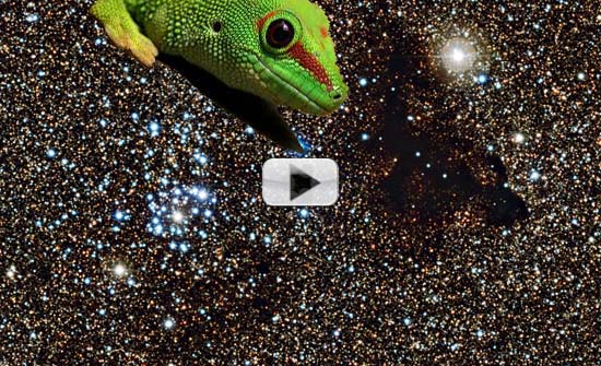 Dark Cloud In Space Resembles A Gecko? | Video