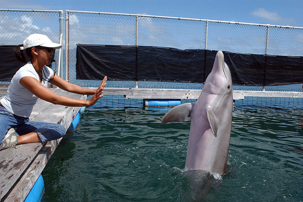 Dolphin Aliens?