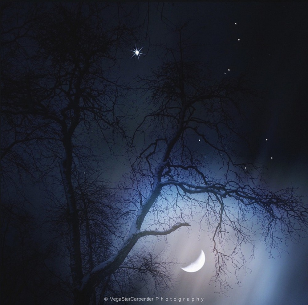Moon and Jupiter Shine Among Trees in Stunning Photo