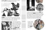 "Fruit flies launched in 1947 became the first animals to reach outer space and be recovered alive. <a href=""http://www.space.com/20648-animals-in-space-history-infographic.html"">See the history of animals in space in this Space.com infographic</a>."