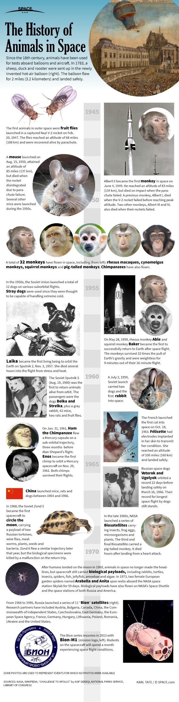 History of Animals in Space (Infographic)