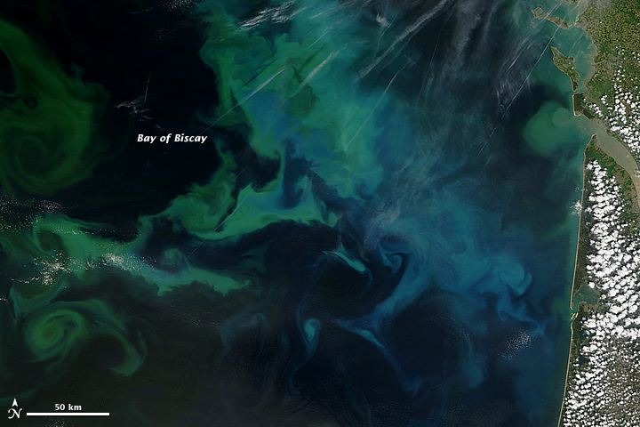 Beautiful Plankton Blooms Seen from Space