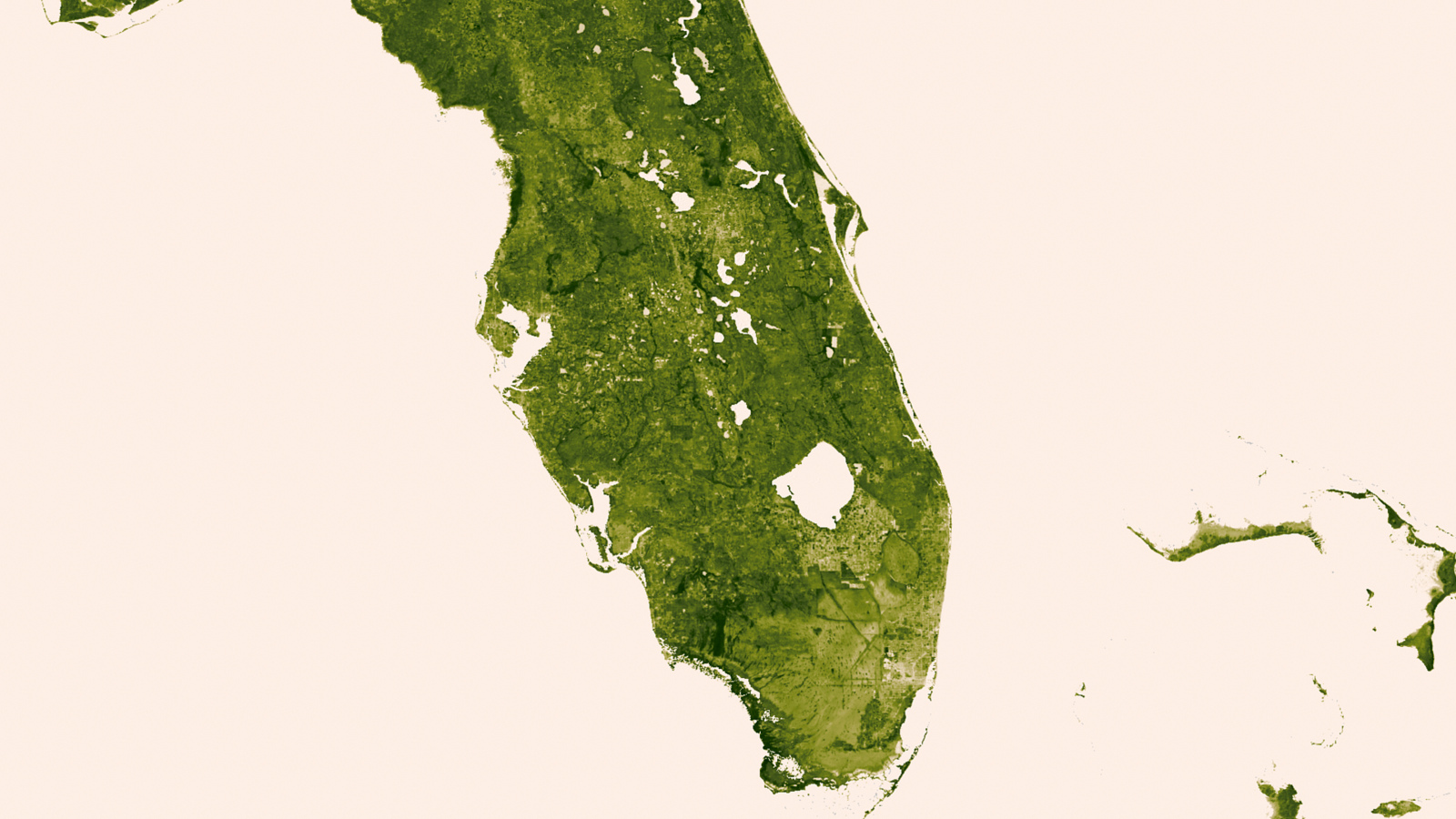 Herbal Earth: Florida Everglades