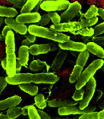 Bacteria In Space Grows in Strange Ways