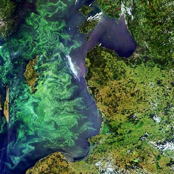 A colorful summer marine phytoplankton bloom fills much of the Baltic Sea in this Envisat image. While individually microscopic, phytoplankton chlorophyll collectively tints the surrounding ocean waters, providing a means of detecting these tiny organisms from space with dedicated 'ocean color' sensors.